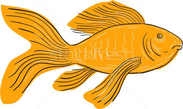 Goud vlinder koi zwemmen tekening schets Stockfoto © patrimonio