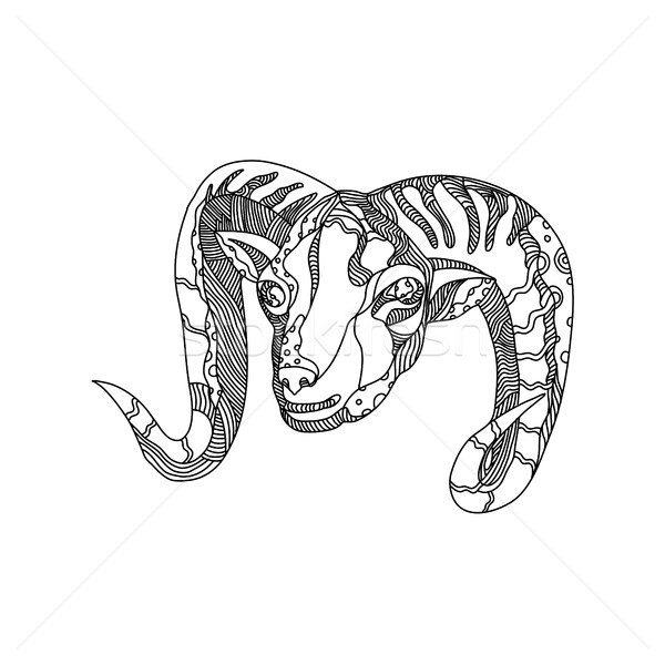 Argali Mountain Sheep Head Doodle Art Stock photo © patrimonio
