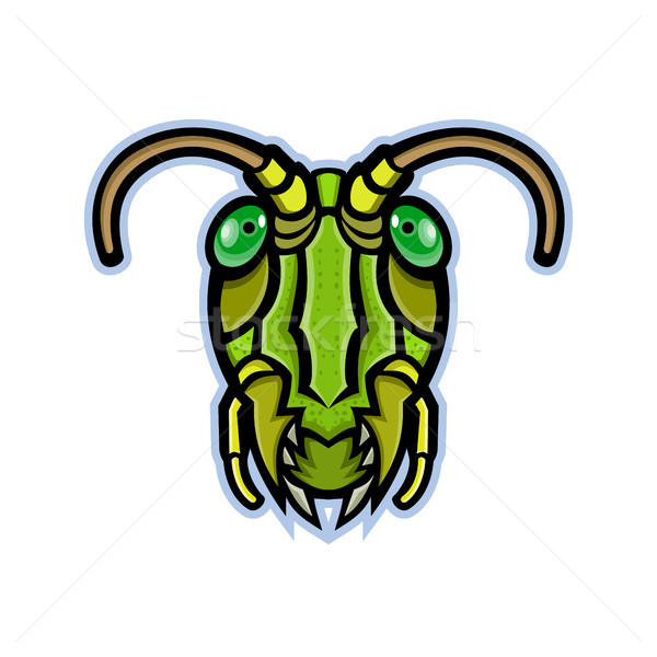 グラスホッパー 頭 マスコット アイコン 実例 昆虫 ストックフォト © patrimonio