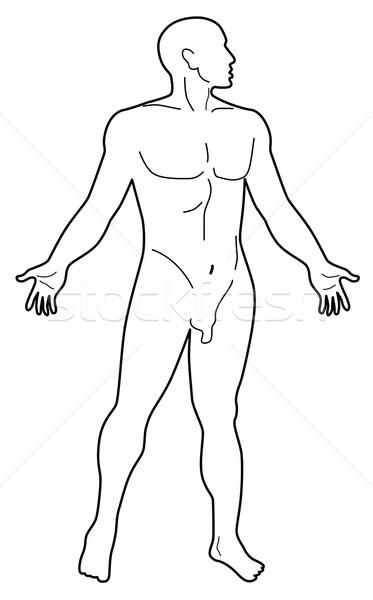 男性 人体解剖学 シルエット 実例 立って ストックフォト © patrimonio