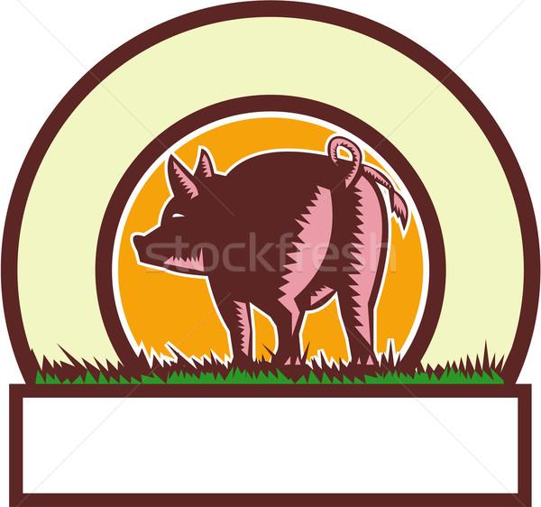 Pig Tail Rear Circle Woodcut Stock photo © patrimonio
