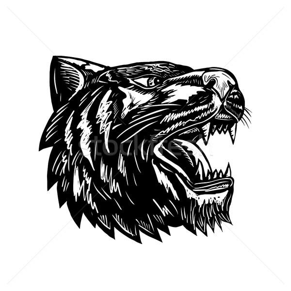 тигр черно белые ретро стиль иллюстрация голову Сток-фото © patrimonio
