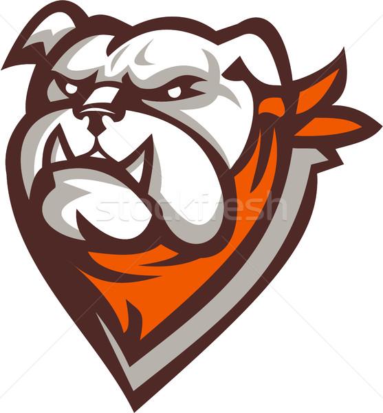 Angry Bulldog Wearing Neckerchief Retro Stock photo © patrimonio