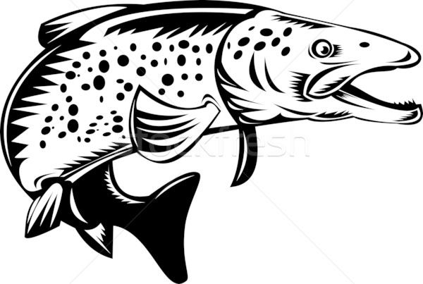 spotted speckled trout fish jumping Stock photo © patrimonio