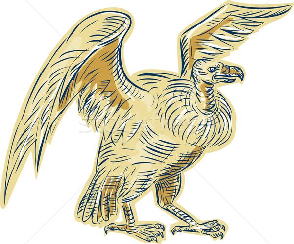 Vulture Buzzard Etching Stock photo © patrimonio