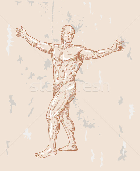 Masculino anatomia humana mão ilustração corpo músculo Foto stock © patrimonio
