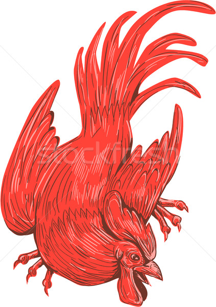 Chicken Rooster Crouching Drawing Stock photo © patrimonio