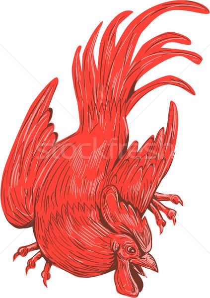 Kip haan hurken tekening schets stijl Stockfoto © patrimonio