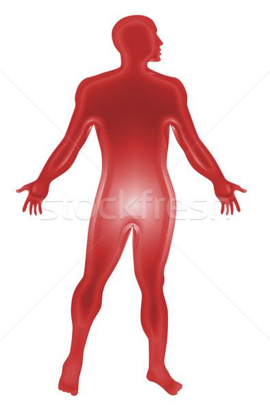 Masculino anatomia humana vermelho ilustração Foto stock © patrimonio