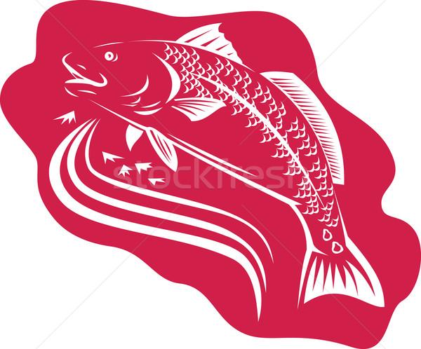 Kırmızı davul spot kuyruk bas balık Stok fotoğraf © patrimonio