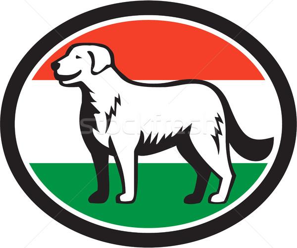 Stock fotó: Kutya · magyar · zászló · ovális · retro · illusztráció