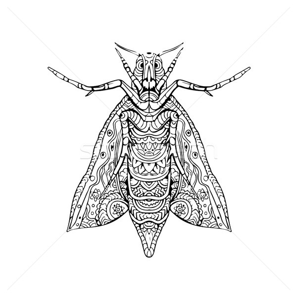 Elephant Hawk Moth Mandala Stock photo © patrimonio