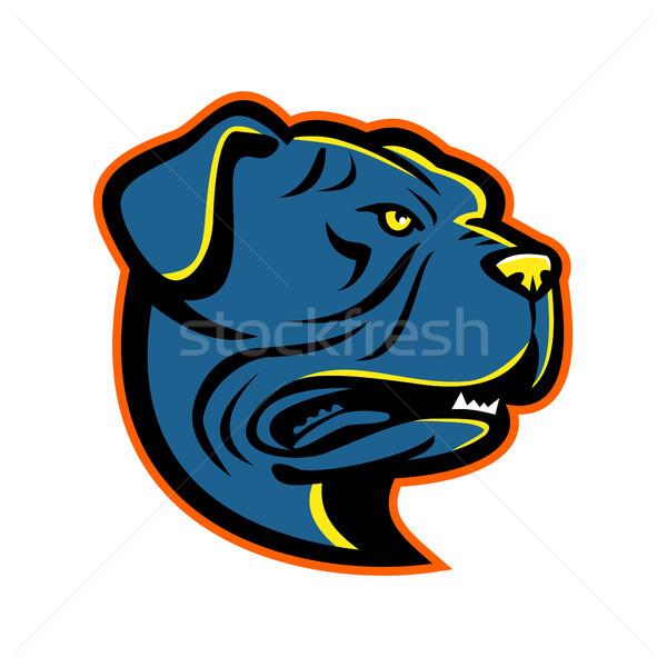 Leavitt Bulldog Head Mascot Stock photo © patrimonio