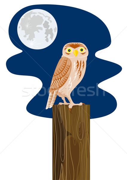 Owl on Branch Retro Stock photo © patrimonio