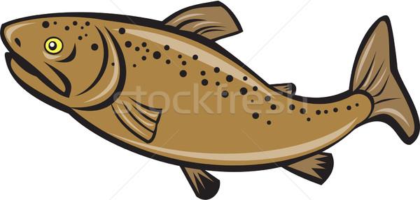 Marrón trucha peces lado Cartoon ilustración Foto stock © patrimonio