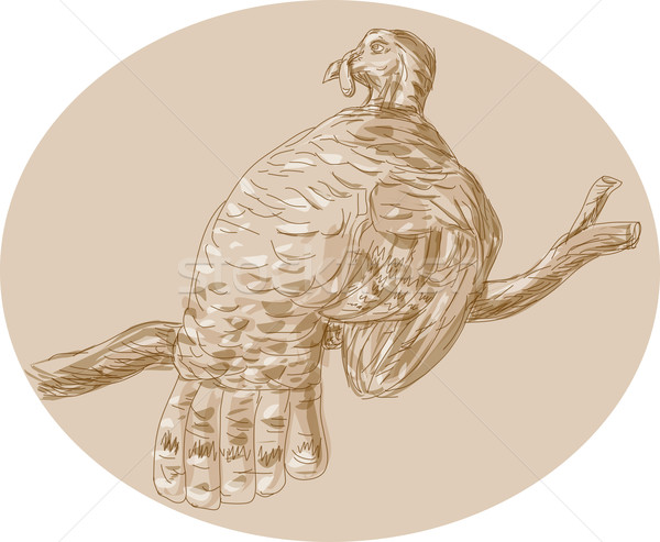 Wild Turkey Perching On Branch Sketch Stock photo © patrimonio