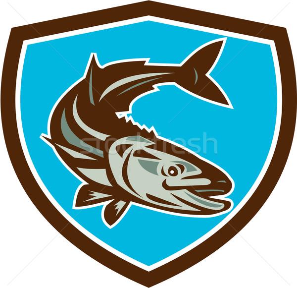 Cobia Fish Diving Down Shield Retro Stock photo © patrimonio