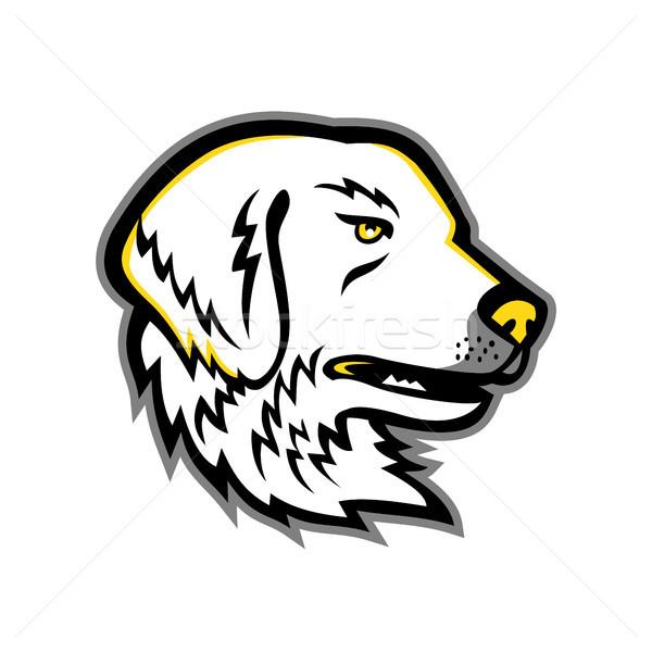 Cão mascote ícone ilustração cabeça Foto stock © patrimonio