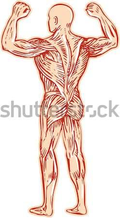 Masculino anatomia humana sistema nervoso ilustração em pé Foto stock © patrimonio