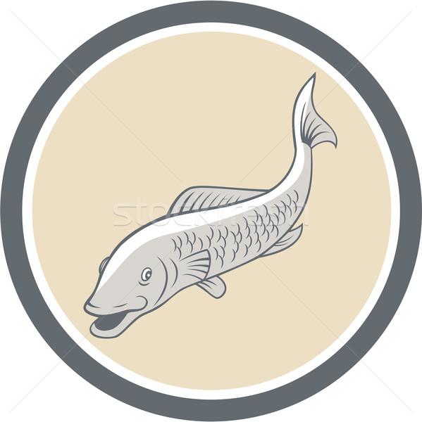 Forel zwemmen cartoon cirkel illustratie vis Stockfoto © patrimonio