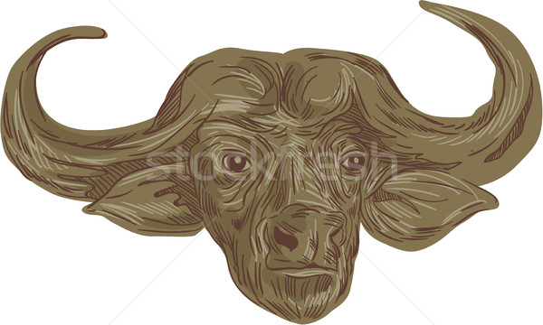 African Buffalo Head Drawing Stock photo © patrimonio