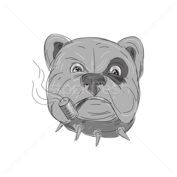 Angry Bulldog Smoking Corn Cob Pipe Drawing Stock photo © patrimonio