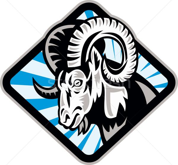 Bighorn Ram Sheep Goat Stock photo © patrimonio