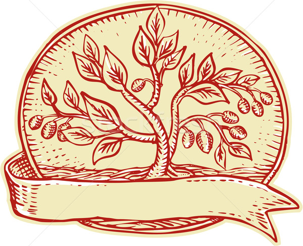Olive Tree Ribbon Oval Etching Stock photo © patrimonio