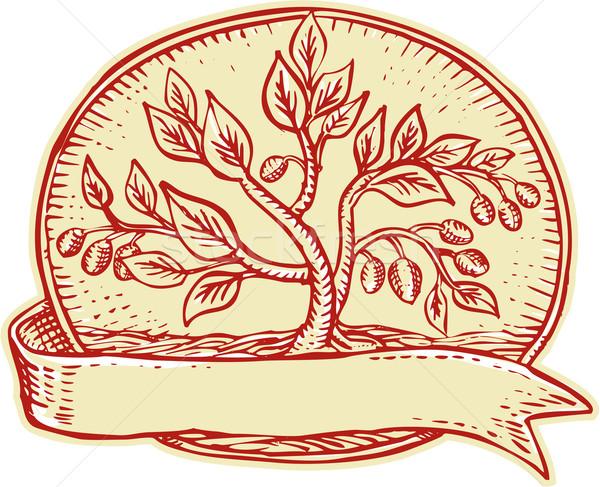 Olijfboom lint ovaal handgemaakt stijl Stockfoto © patrimonio