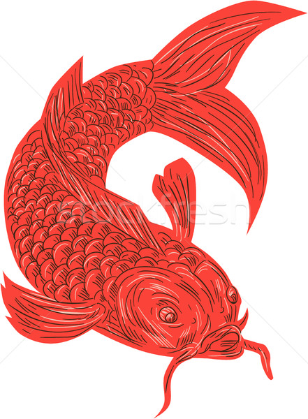 Red Koi Nishikigoi Carp Fish Drawing Stock photo © patrimonio