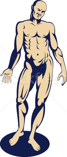 Masculino anatomia humana em pé ilustração brasão lado Foto stock © patrimonio