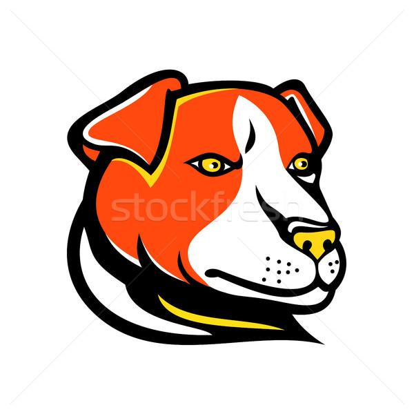 Jack russell terrier maskotka ikona ilustracja głowie mały Zdjęcia stock © patrimonio