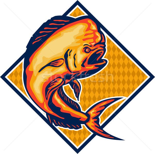 Dorado Dolphin Fish Mahi-Mahi Retro Stock photo © patrimonio
