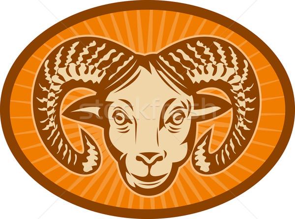 Bighorn sheep or ram Stock photo © patrimonio