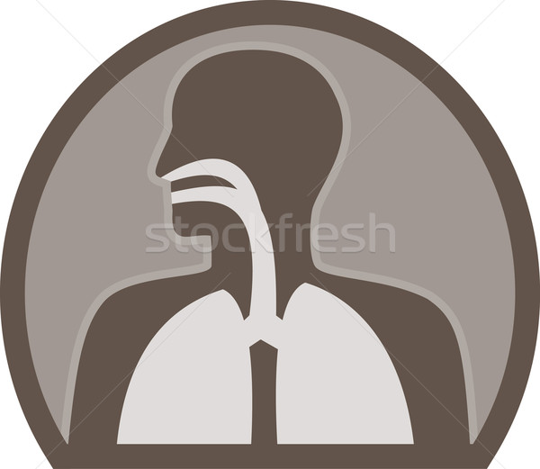 human anatomy respiratory organ Stock photo © patrimonio