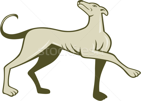 Greyhound Dog Marching Looking Up Cartoon Stock photo © patrimonio