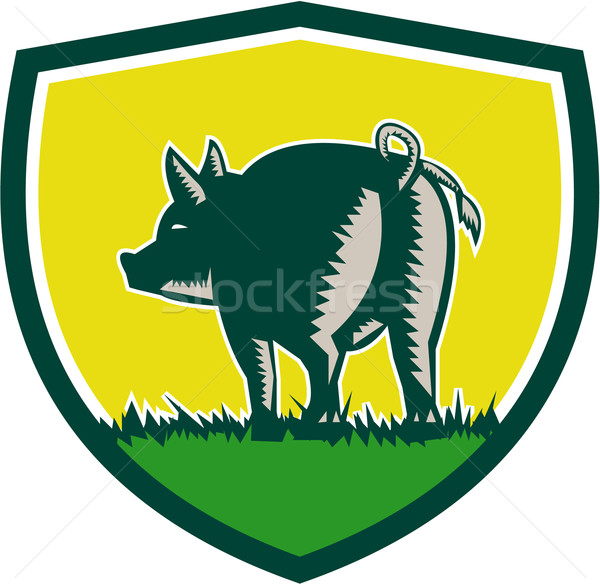 Pig Tail Rear Crest Woodcut Stock photo © patrimonio
