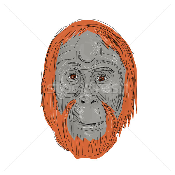 Unflanged Male Orangutan Drawing Stock photo © patrimonio