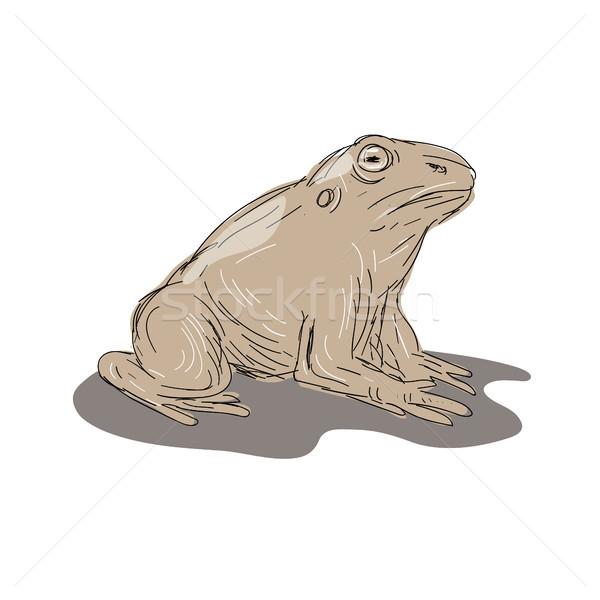 Rospo rana seduta lato disegno illustrazione Foto d'archivio © patrimonio