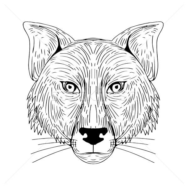 Róka fej elöl rajz illusztráció kilátás Stock fotó © patrimonio