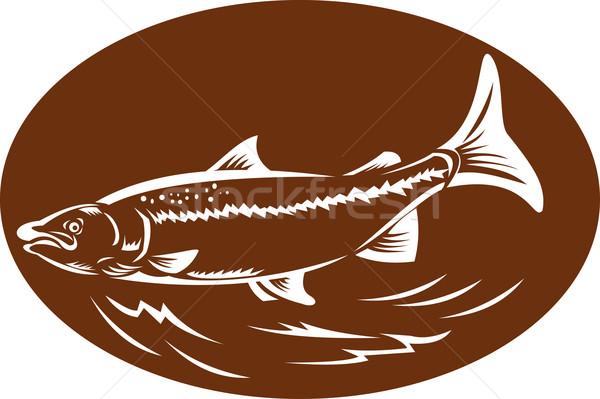 speckled spotted trout fish retro woodcut Stock photo © patrimonio