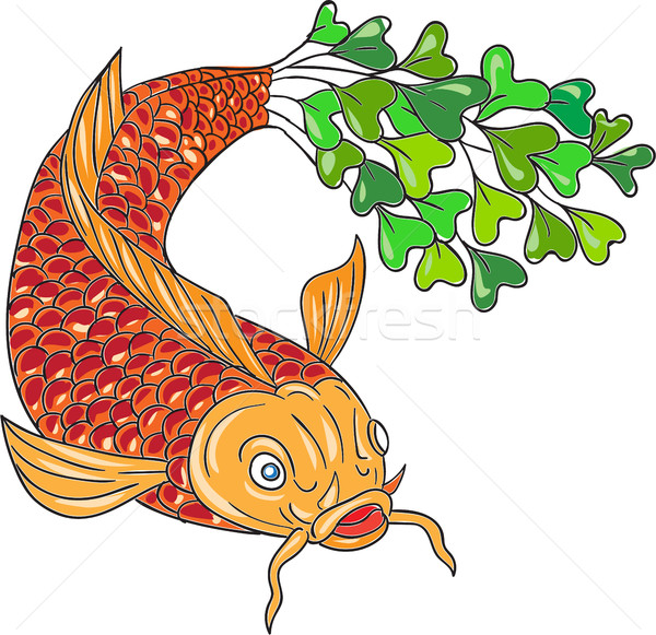 Koi Nishikigoi Carp Fish Microgreen Tail Drawing Stock photo © patrimonio