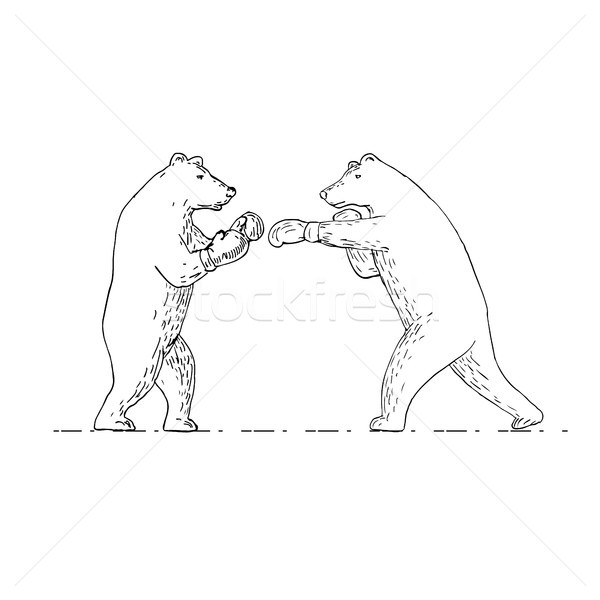Two Grizzly Bear Boxers Boxing Drawing Stock photo © patrimonio
