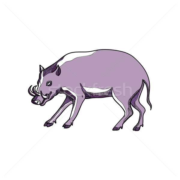 Babirusa or Deer Pig Drawing Stock photo © patrimonio