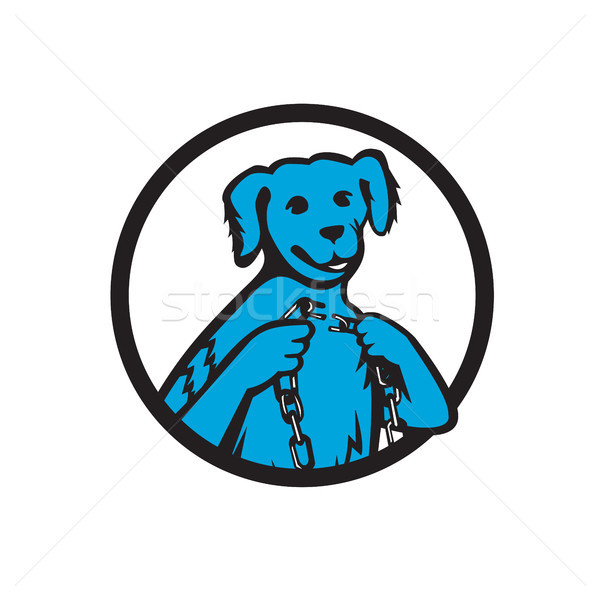 Blue Merle Dog Holding Broken Chain Mascot Stock photo © patrimonio