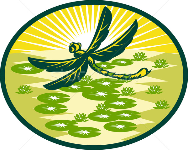 dragonfly flying with lily pads and sunburst Stock photo © patrimonio