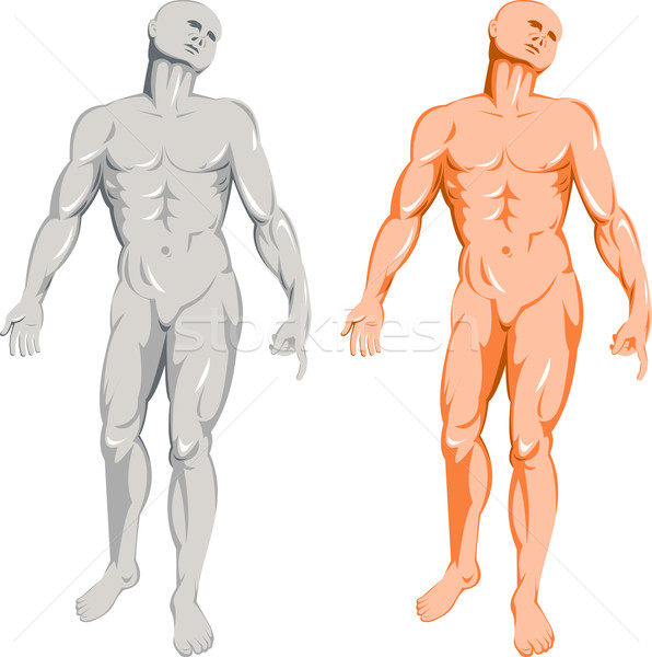 male human anatomy standing Stock photo © patrimonio