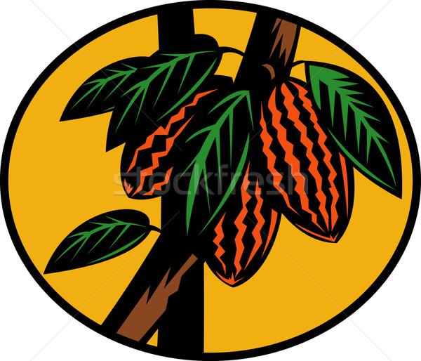 Kakao meyve ağacı örnek Stok fotoğraf © patrimonio