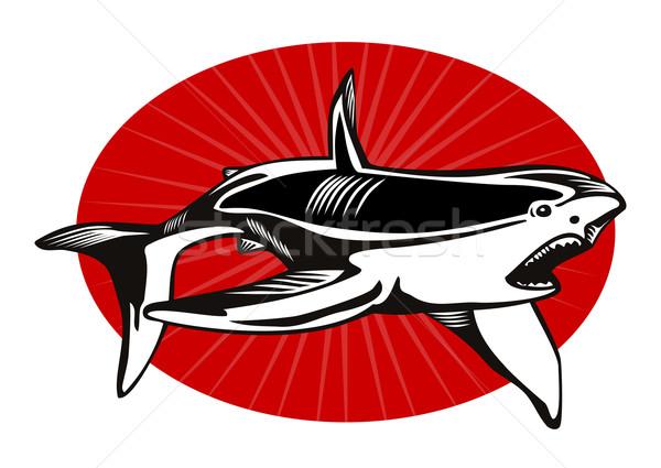 Haai illustratie retro-stijl retro Stockfoto © patrimonio