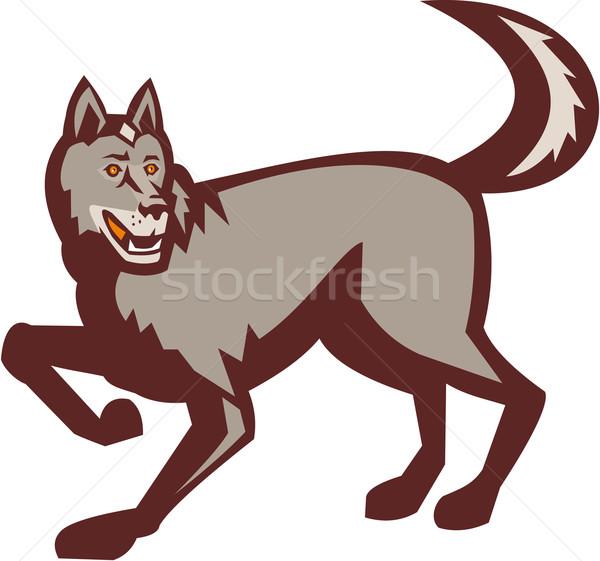 серый волка вид сбоку ретро иллюстрация сторона Сток-фото © patrimonio